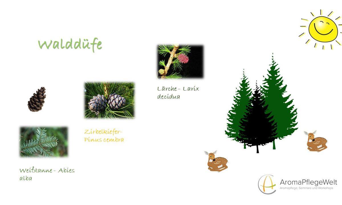 Online-Seminar – Walddüfte – die Kraft der ätherischen Öle der Wälder